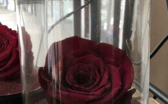 Candice Créations - Rose éternelle